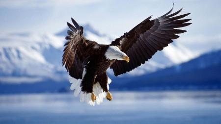 انواع طيور (1)