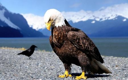 انواع طيور (3)