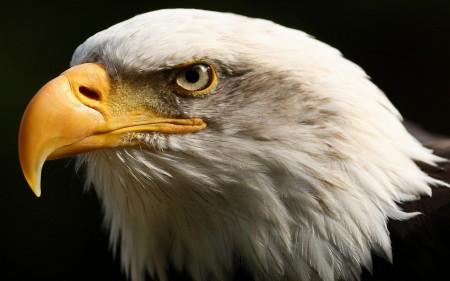 انواع طيور (4)