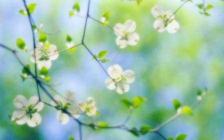 باقة زهور (1)