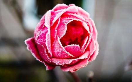 باقة زهور (2)