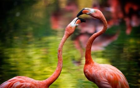 بالصور حيوانات HD (5)