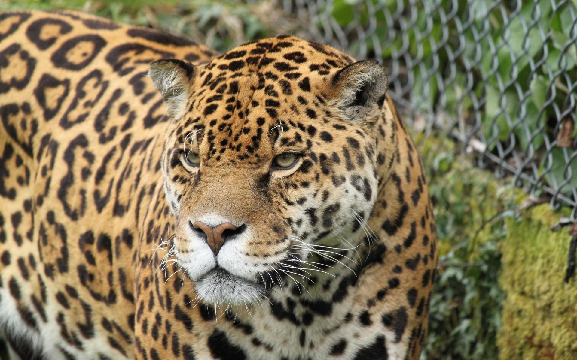 صور حيوانات الغابة بالكامل HD اجمل صور خلفيات الحيوانات ...