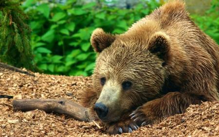 صور حيوانات الغابة بالكامل Hd اجمل صور خلفيات الحيوانات ميكساتك