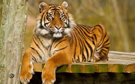حيوانات الغابة (1)