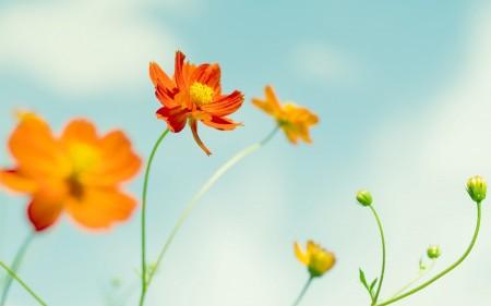 خلفيات زهور HD (1)