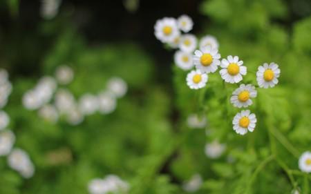 خلفيات زهور HD (4)