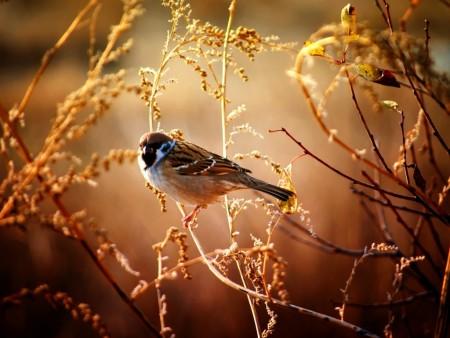خلفيات طيور HD (6)