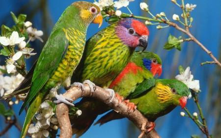 خلفيات عصافير بالصور (4)