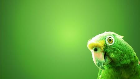 خلفيات عصافير بالصور (5)