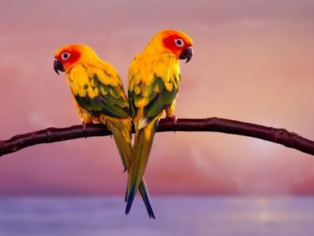 خلفيات عصافير جديدة (2)