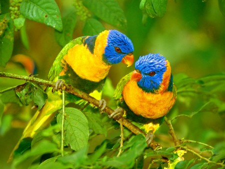 خلفيات عصافير جميلة (2)