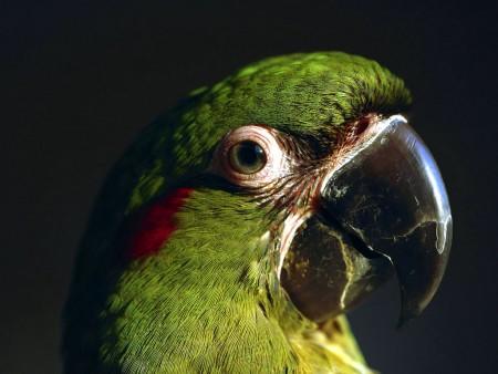 خلفيات عصافير جميلة (3)
