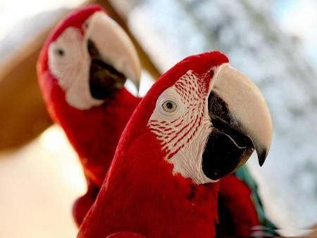 خلفيات عصافير (1)