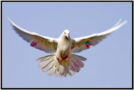 خلفيات وصور طيور (2)
