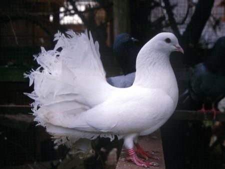 خلفيات وصور طيور (3)