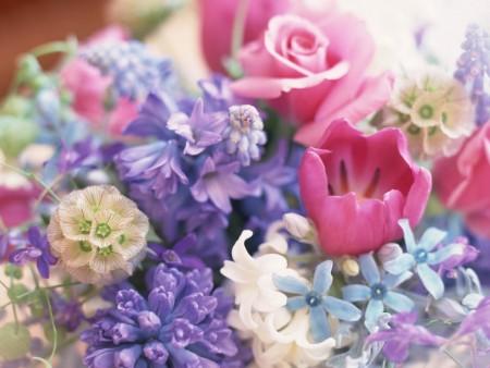 زهور البنفسج
