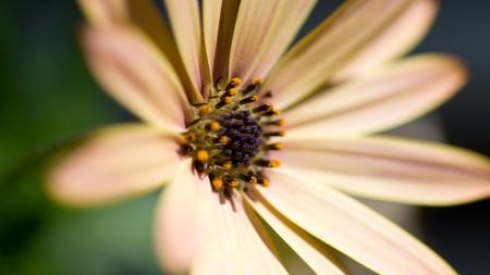 زهور الحب (1)