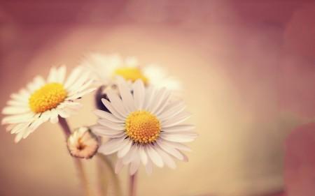 زهور الحب (3)