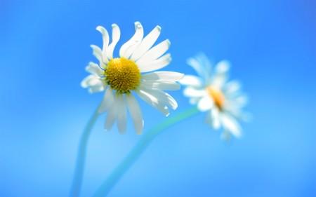 زهور جميلة (1)