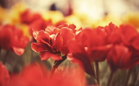 زهور جميلة (5)