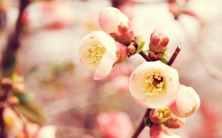 زهور طبيعية (1)