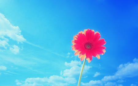 زهور طبيعية (3)