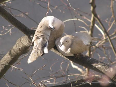 صور اجمل طيور (1)