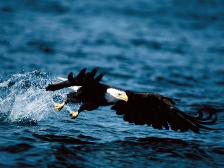 صور اجمل طيور (2)