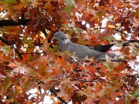 صور الطيور الجميلة (1)