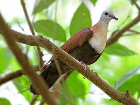 صور الطيور الجميلة (3)