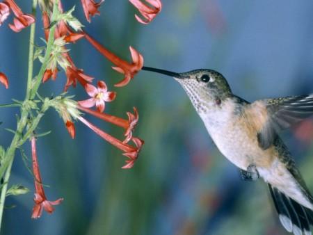 صور الطيور (2)