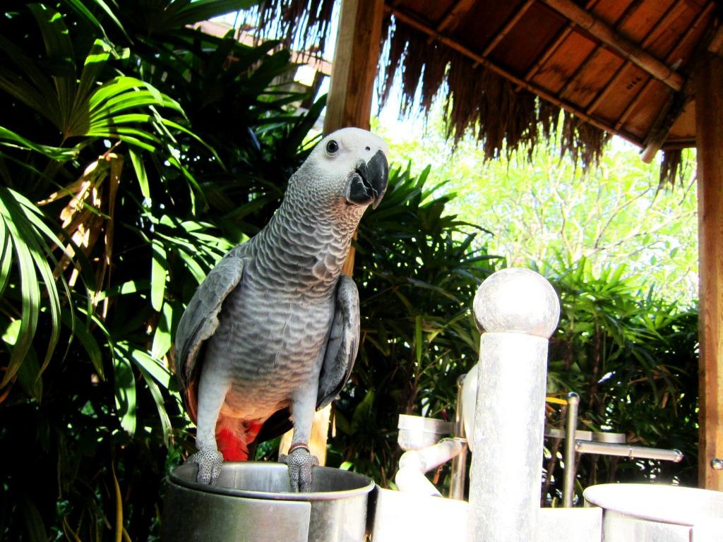 صور الطيور (4)
