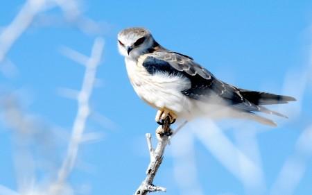 صور العصافير (2)