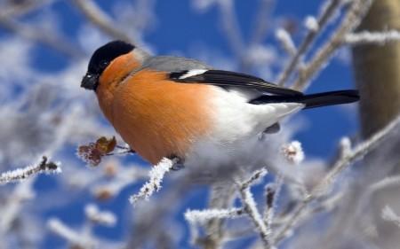 صور انواع الطيور المختلفة ملونة (2)