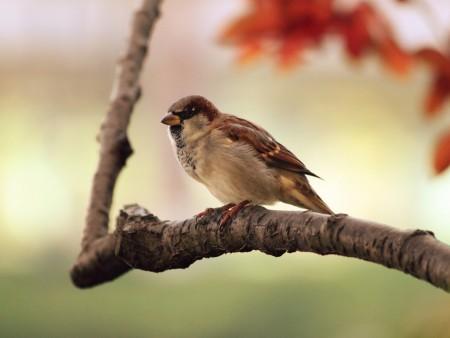 صور انواع الطيور المختلفة ملونة (6)