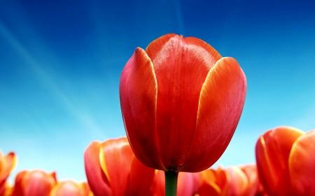 باقات زهور 1