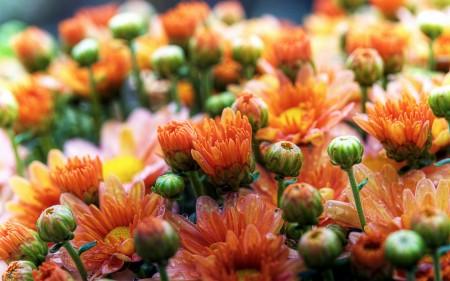 صور باقات زهور (3)