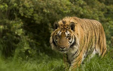 صور حيوانات الغابة بالكامل (3)