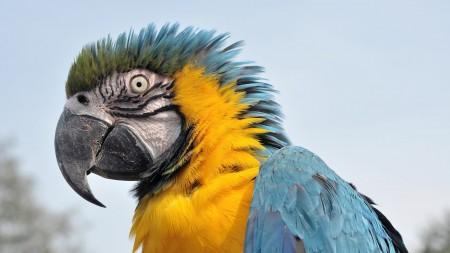 صور خلفيات العصافير (1)