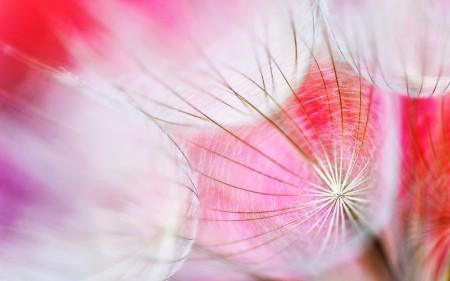 زهور جميلة 1
