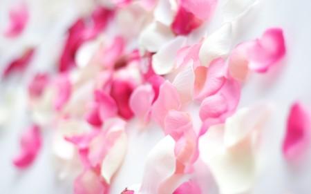 صور زهور جميلة (4)