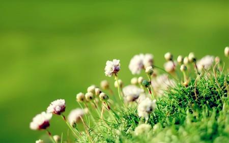 صور زهور (2)