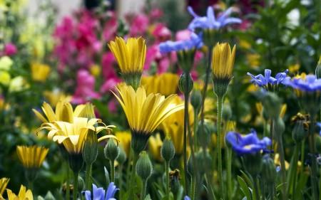 صور زهور HD (3)