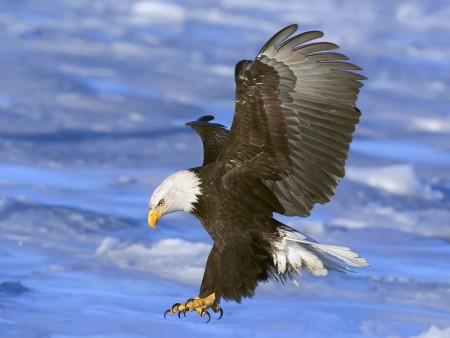 صور طيور حب (1)