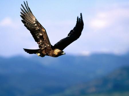 صور طيور حب (2)