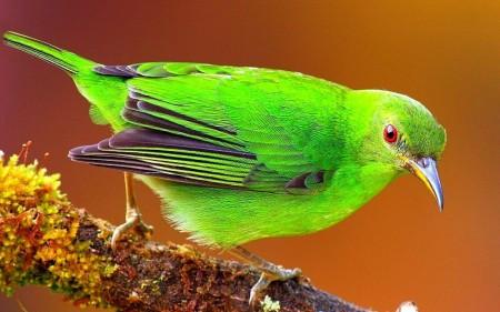 صور طيور ملونة جميلة خلفيات الطيور بانواعها (1)
