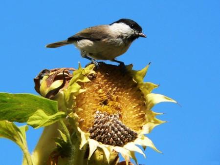 صور طيور ملونة جميلة خلفيات الطيور بانواعها (2)