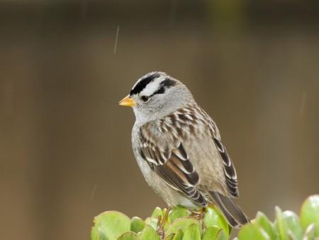 صور طيور ملونة جميلة خلفيات الطيور بانواعها (4)