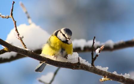 صور طيور ملونة جميلة خلفيات الطيور بانواعها (5)